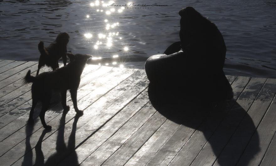 El perro acosa al lobo marino por uso de espacio, limitando sus tiempos de descanso y sociabilización.